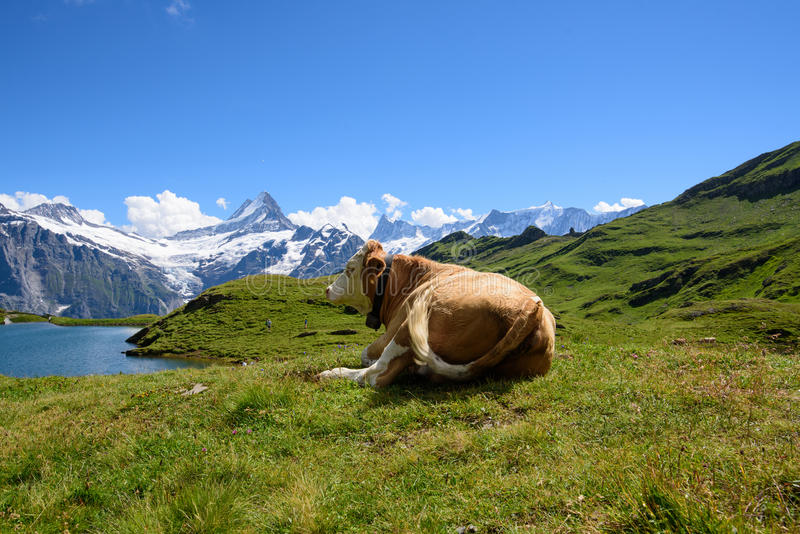Landscape Scene from First to Grindelwald, Bernese Oberland, Switzerland royalty free stock photo