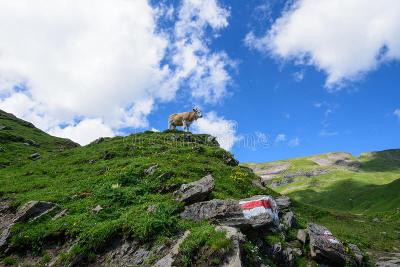 Landscape Scene from First to Grindelwald, Bernese Oberland, Switzerland royalty free stock photos