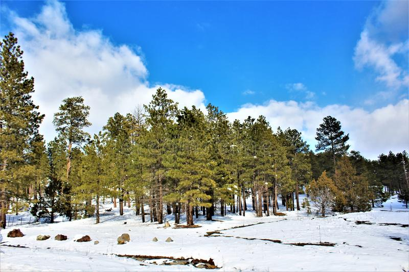 Landscape Scenery, Maricopa County, Oak Creek Canyon, Arizona, United States. Spring landscape scenery view of the mountains and area vegetation from Oak Creek royalty free stock photography