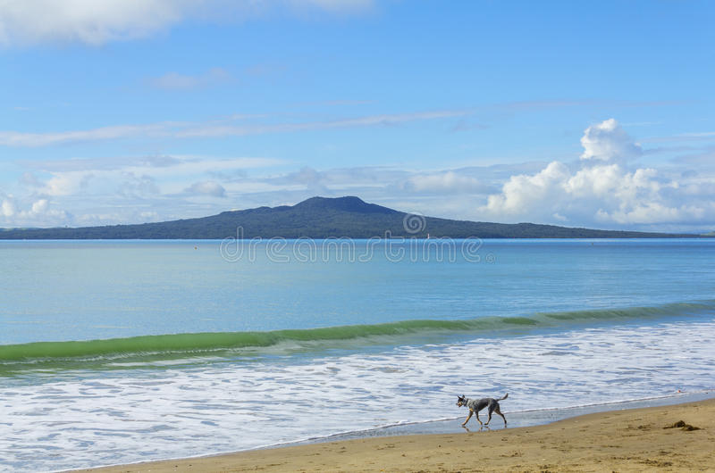 Landscape Scenery of Milford Beach Auckland New Zealand; View to Rangitoto Island during Sunny Day. It`s popular beach for family picnic and walking dogs too stock photos