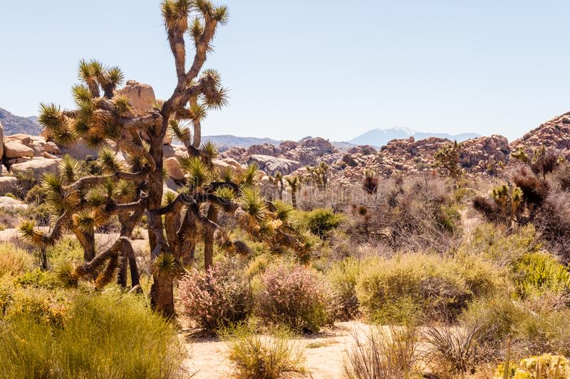 Landscape scenic rocks formation with copy space. Landscape scenic rock formation mountain view wit clear blue sky background. Picture taken at Joshua Tree stock image