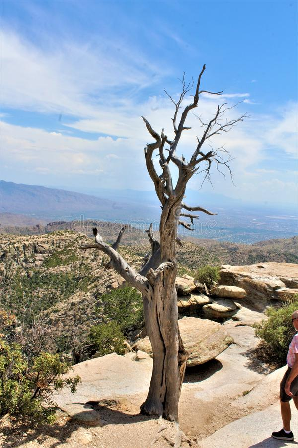 Windy Point Vista, Mount Lemmon, Santa Catalina Mountains, Lincoln National Forest, Tucson, Arizona, United States. Landscape scenic view with mountains and royalty free stock image