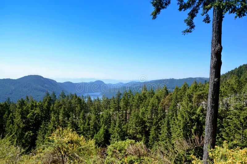 Landscape of the sea bay surrounded by mountains and coniferous forest. Spruce trees in the foreground royalty free stock photo