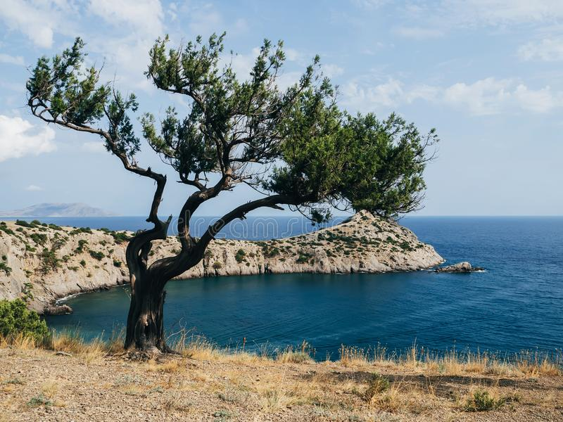 Landscape with sea and mountains and pine trees. In front with blue sky in summer royalty free stock photos