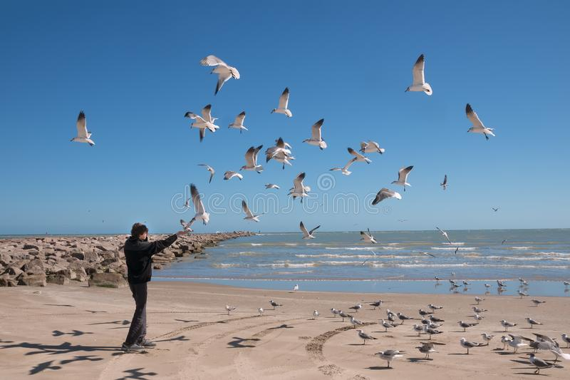 Landscape with the sea and a teenager who feeds flying seagulls. Texas Coast, Gulf of Mexico, US. A stock photography