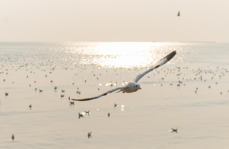 Landscape,Seagulls are flying Above the a flock of bird on sky at the sea at sunset stock photos