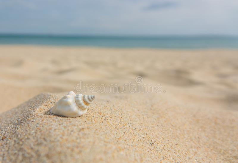 Landscape with shells on tropical beach. Close up sea shell on sandy seaside. Summer background stock images