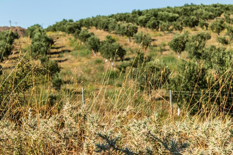 A landscape shoot from plain with small green plants royalty free stock image