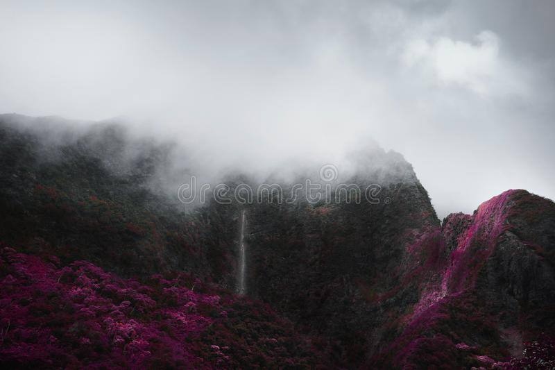 Landscape shot of a beautiful mountain covered in green purple trees with its peak in fog royalty free stock photos