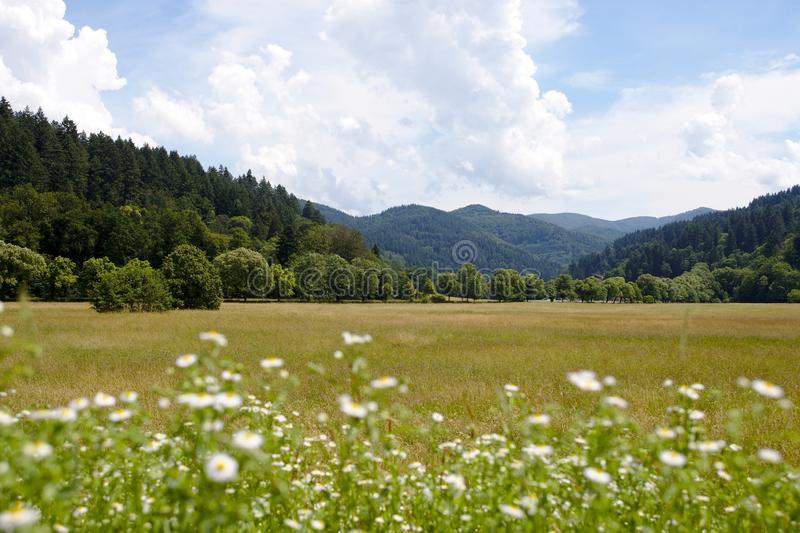 Landscape shot of the green hills of the black forest, germany stock photography
