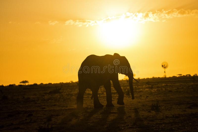 Elephant silhouette during sunrise at Tsavo East stock photography
