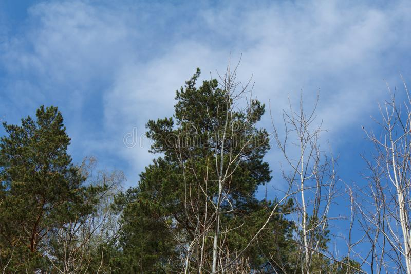 Landscape, sky, green tree, treetops, forest on mountain stock photo