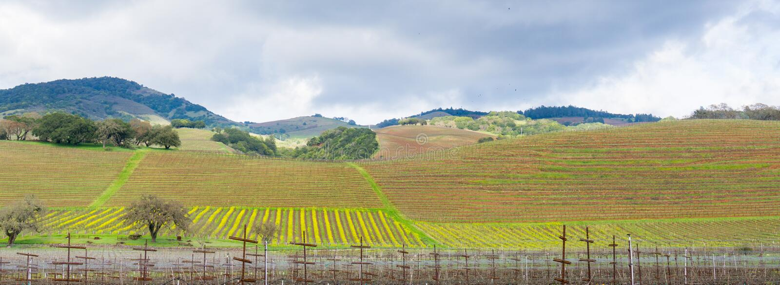 Hills covered in vineyards in Sonoma Valley at the beginning of spring, California royalty free stock photos