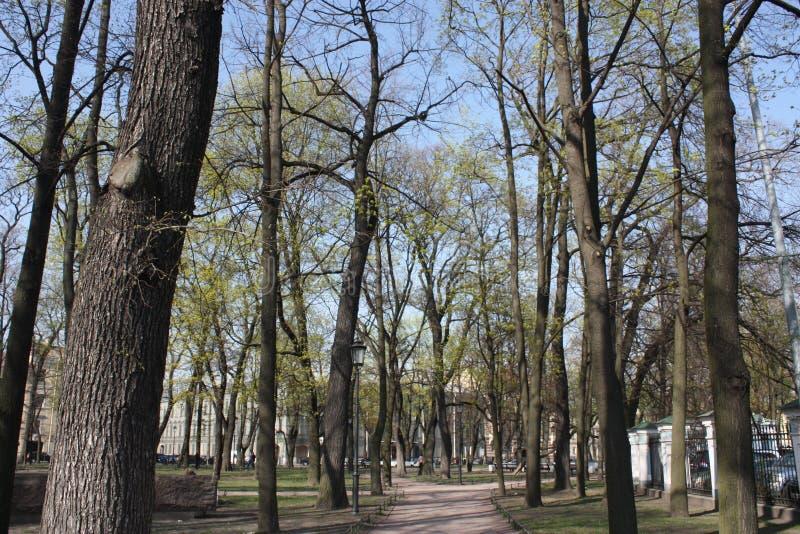 :  landscape of the spring  Park. Landscape of the spring city Park n stock images