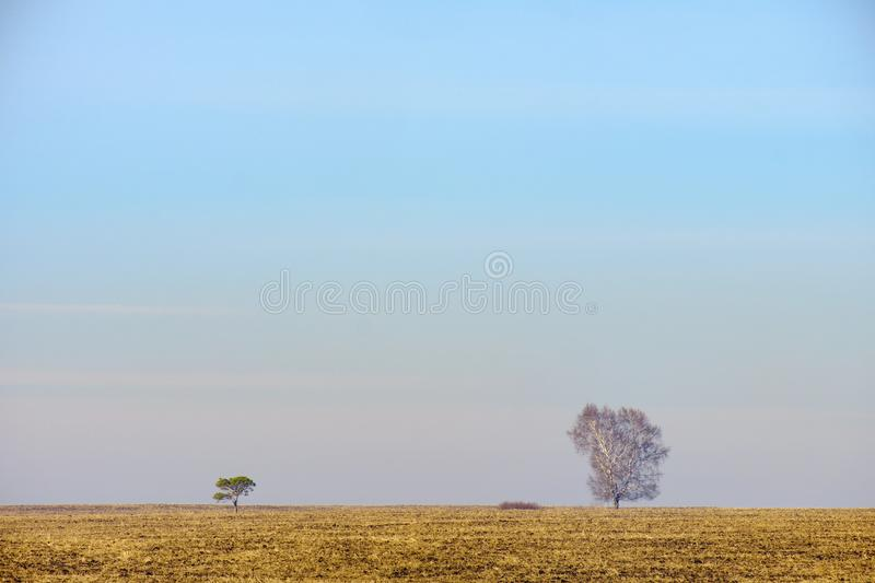 Landscape spring field yellow grass in the distance two trees small and large stock photo