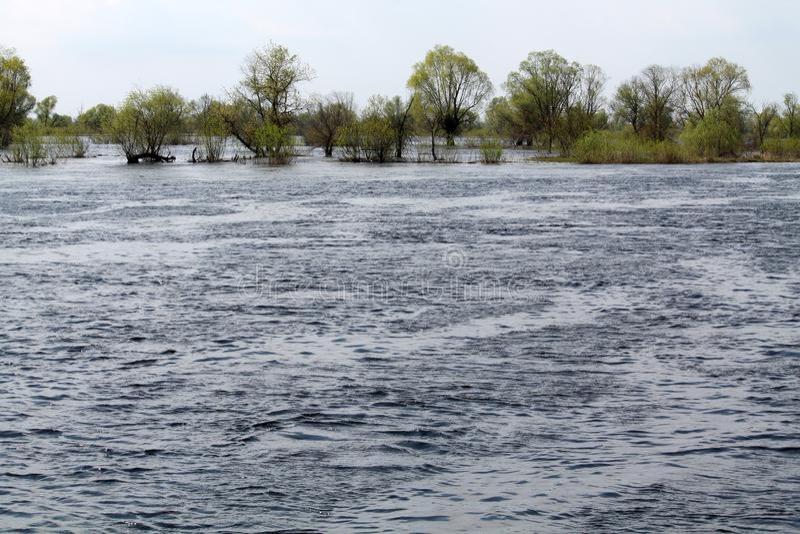 Landscape with spring flooding of Pripyat River near Borki, Zhytkavichy District of Gomel Region of Belarus. Landscape with spring flooding of the Pripyat River royalty free stock images