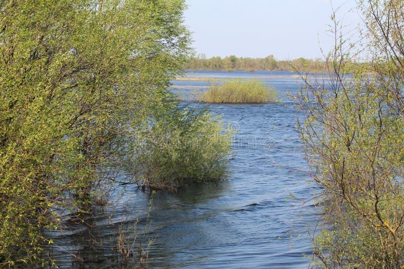 Landscape with spring flooding of Pripyat River near Borki, Zhytkavichy District of Gomel Region of Belarus. Landscape with spring flooding of the Pripyat River royalty free stock photo