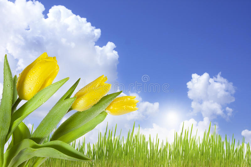 Download Landscape Of Spring Flowers On Blue Sky Stock Photo - Image: 18319224