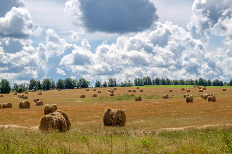 Landscape with straw bales in summer. Beautiful landscape with straw bales in end of summer royalty free stock photo