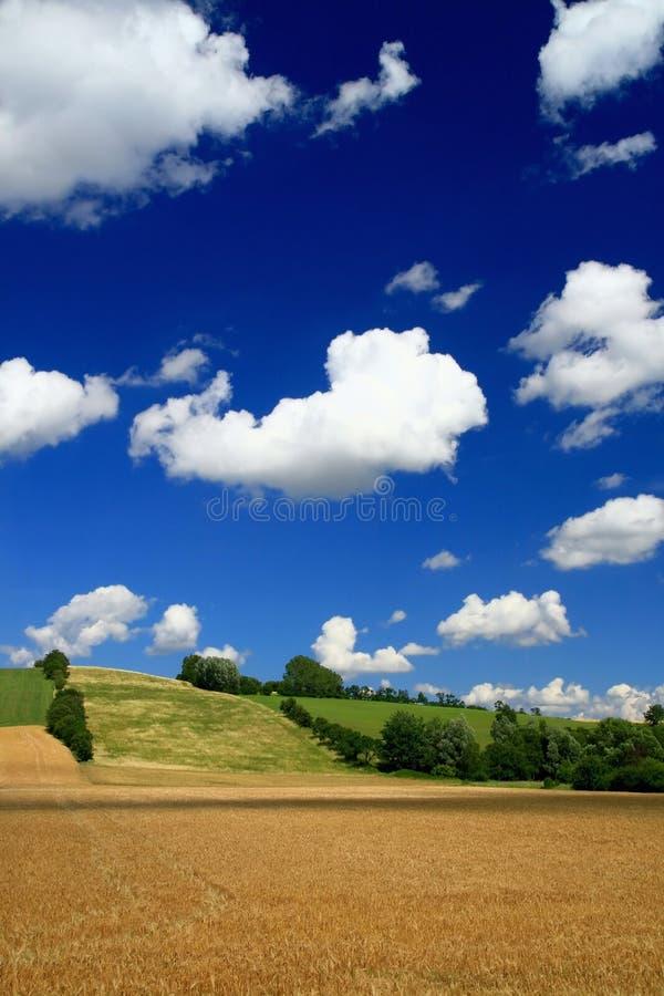 Landscape in summer stock images