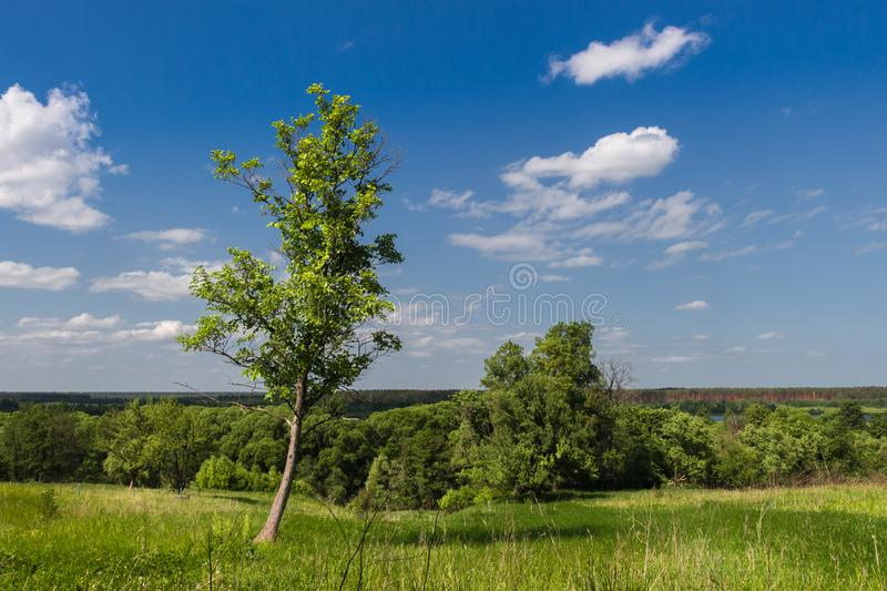 Landscape, summer, green grass and blue sky. With clouds, lonely tree royalty free stock image