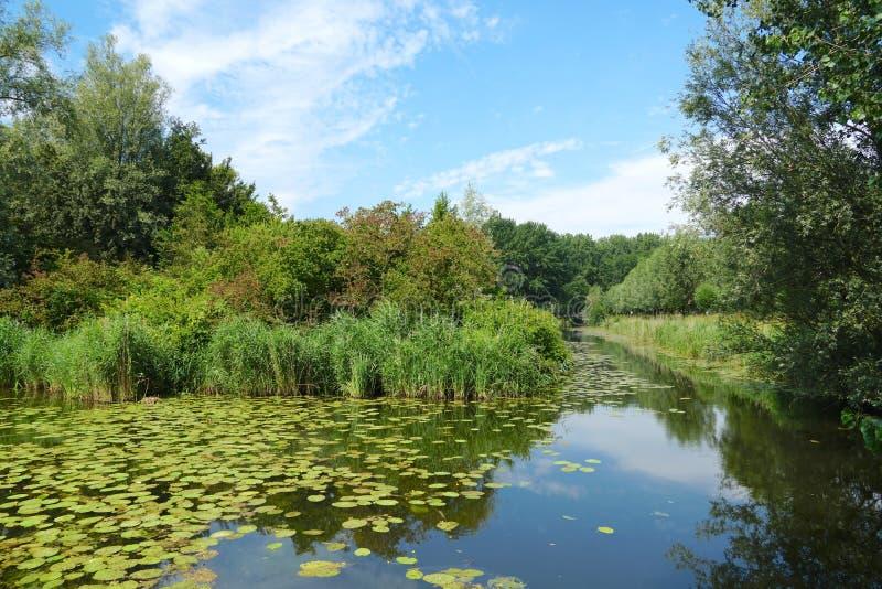 Biesbosch national park in the Netherlands. Landscape in summer time in the Biesbosch national park in the Netherlands stock photography
