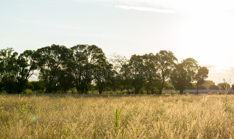 Landscape sunset of field with sunlight stock photos