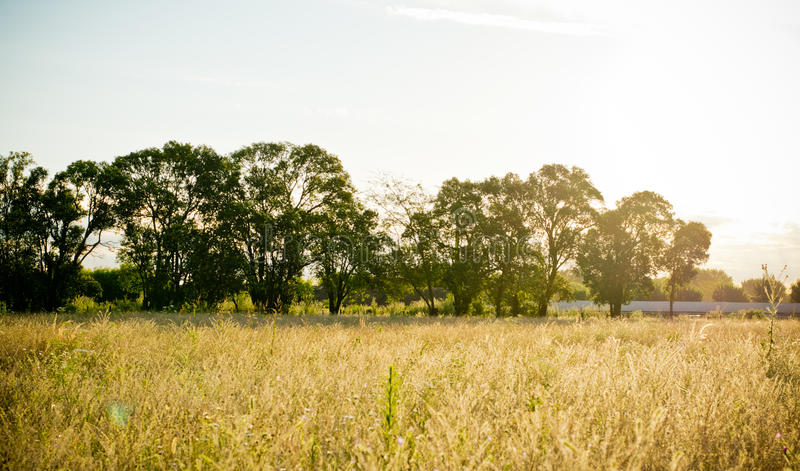 Landscape sunset of field with sunlight stock photo