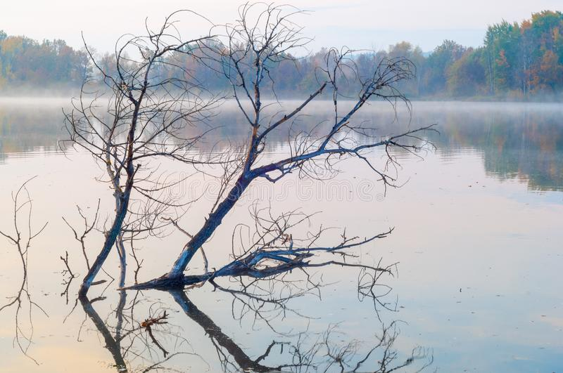 Landscape. Sunset over the lake, fall trees reflected in water. Fog, mist, haze, smoke, brume, toman stock image