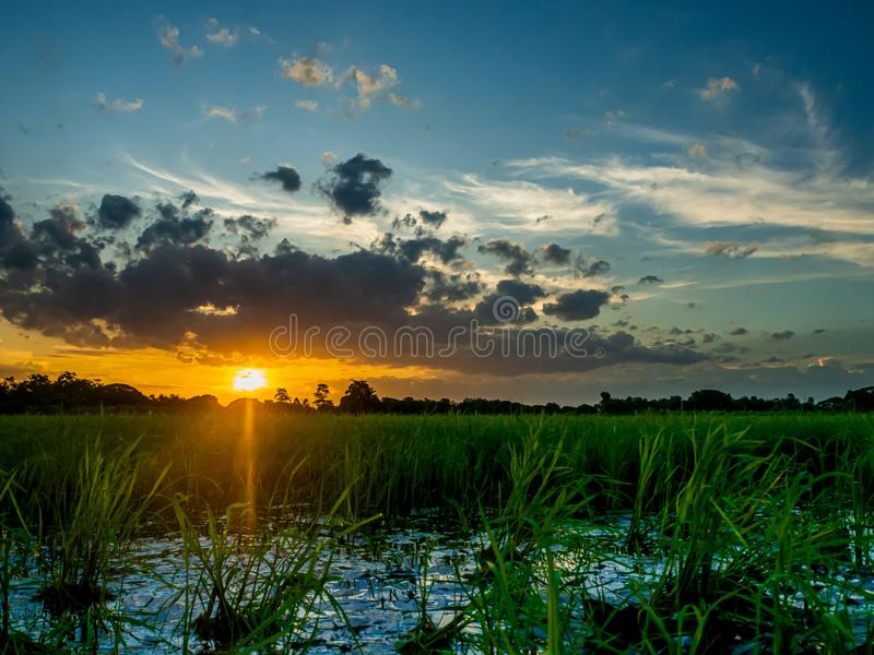 Landscape of suset with Green fields stock photo
