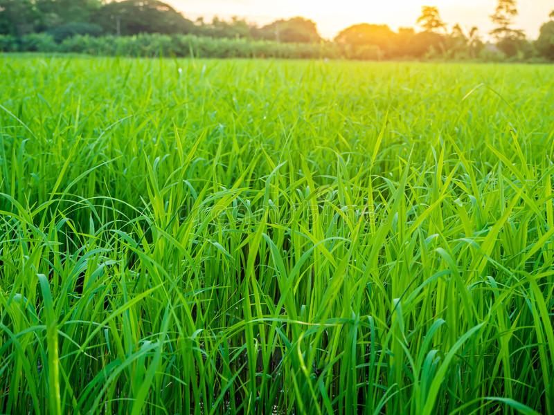 Landscape of suset with Green fields royalty free stock photo