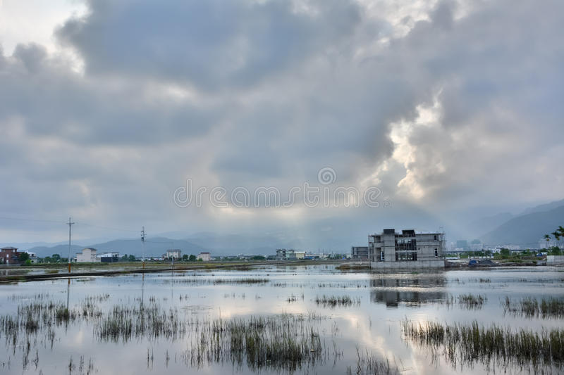 Landscape with a swamp royalty free stock photos