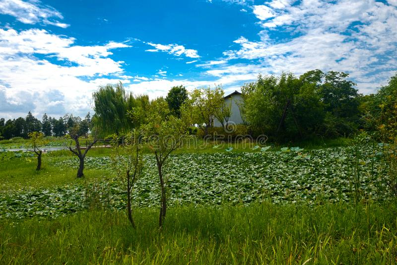 The landscape of Taihu lake stock photos