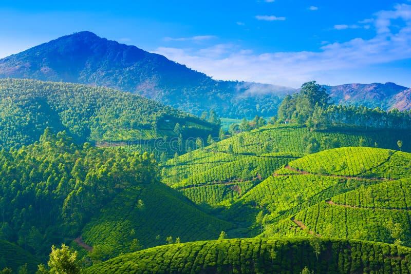 landscape of the tea plantations in India, Kerala, Mun stock photos