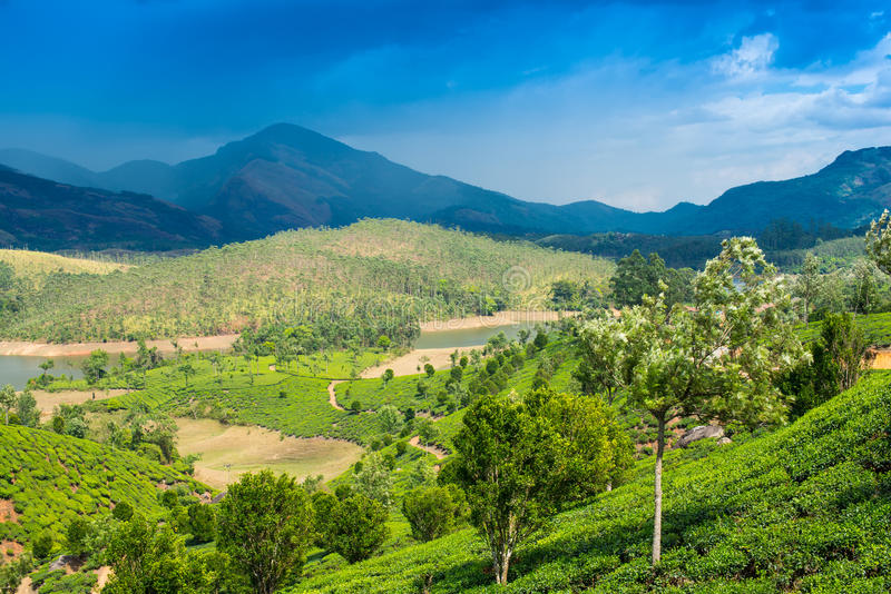Landscape tea plantations, mountains and the river in India. Kerala stock photography