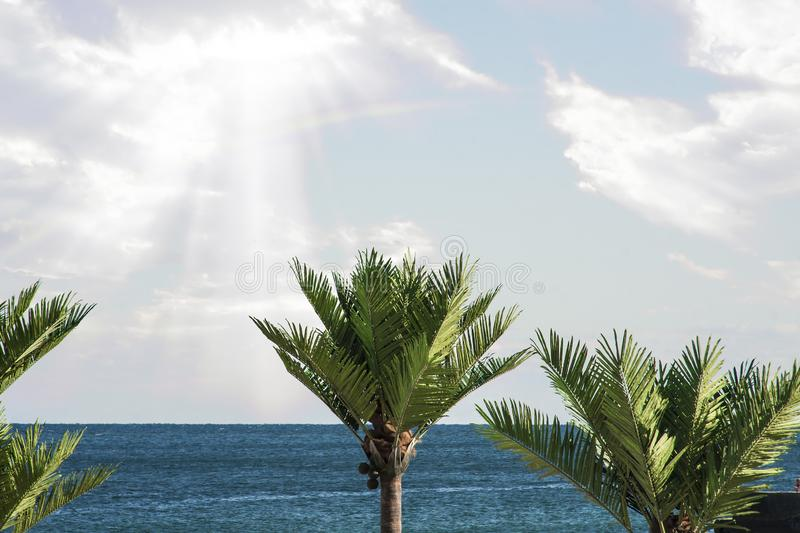 Landscape of the tops of palm trees against stock image