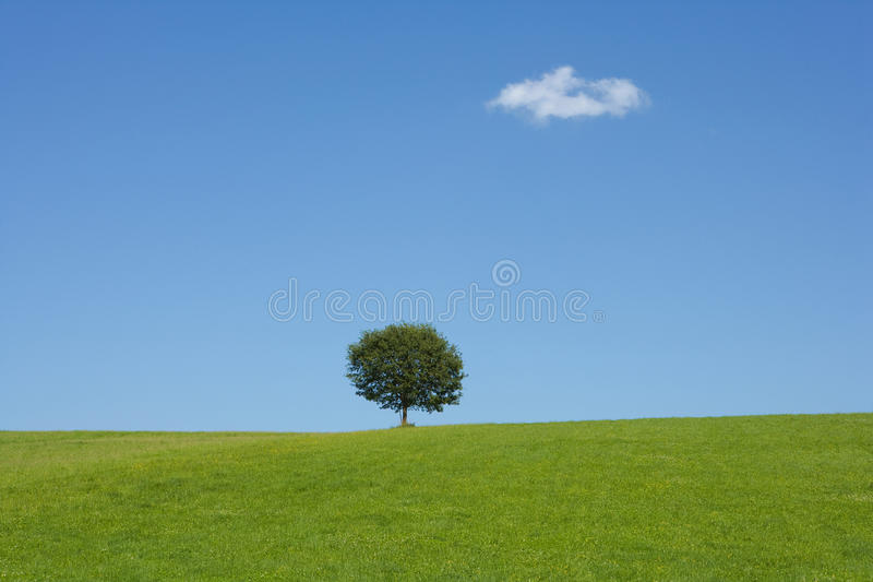 Landscape With A Tree Stock Images