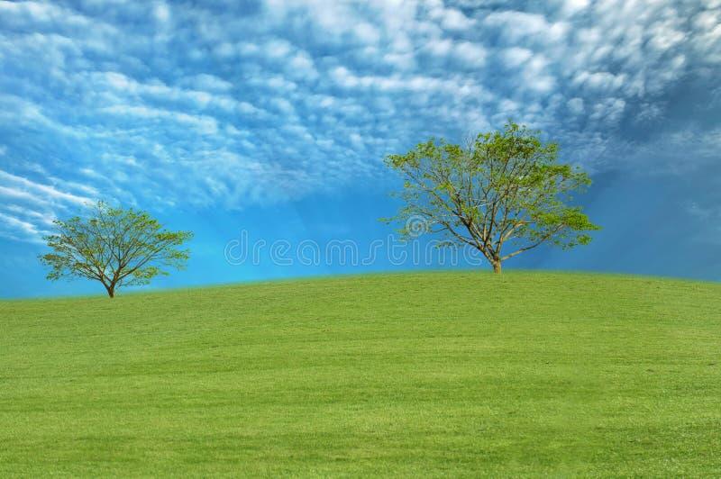 Landscape tree on green field with sky. Landscape tree on green field with blue sky stock photography
