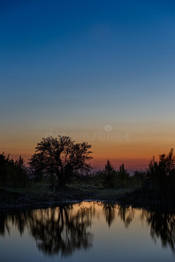 Landscape with a tree on the lake after sunset.  stock photography