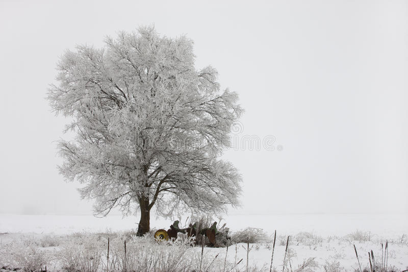 Landscape of tree layered in frost. royalty free stock photo