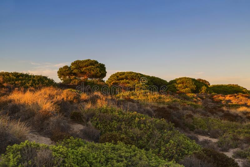 Landscape with tree on the sand dune in sunset time stock images