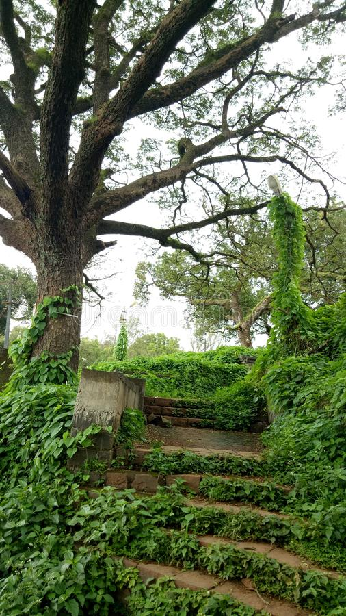 Landscape, tree and stairs going upwords stock image