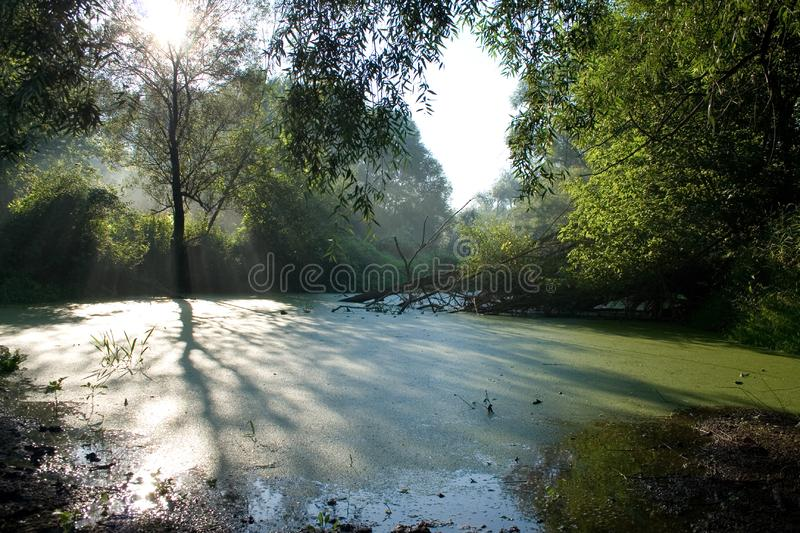 landscape with tree and tree shadow on duckweed stock photos