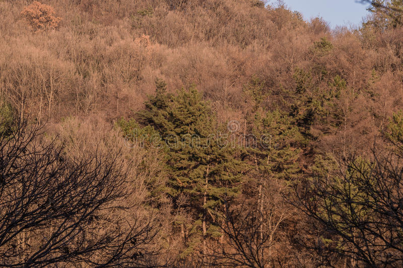 Landscape of treeline with a small clearing in the foreground. With several small shrubs royalty free stock photos