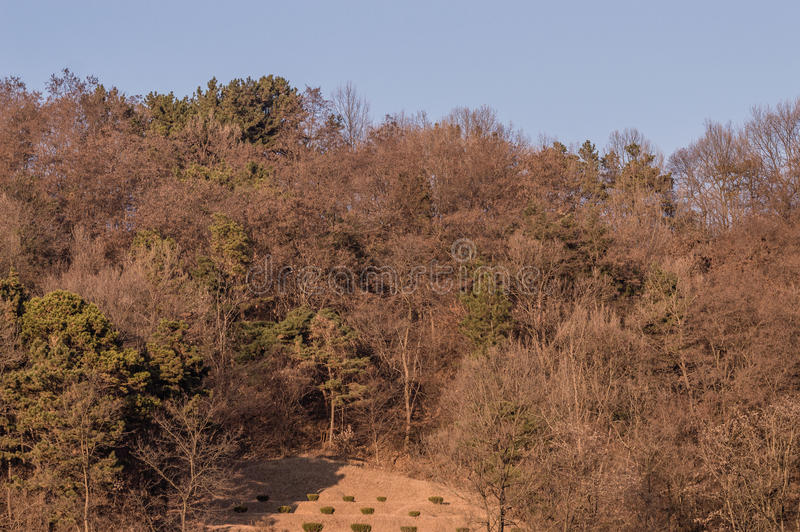 Landscape of treeline with a small clearing in the foreground. With several small shrubs stock photos