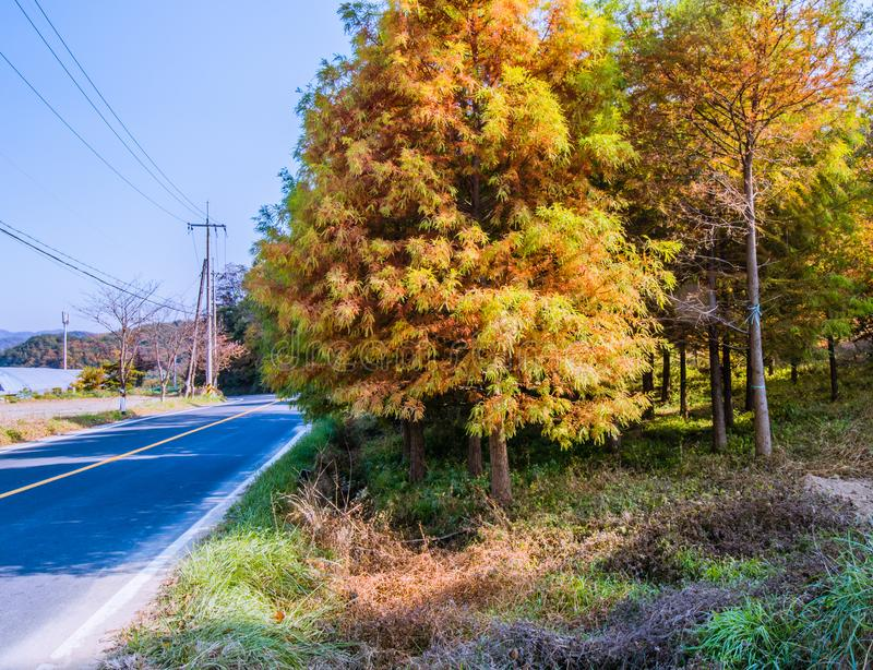 Trees in fall colors next to road in the countryside stock image