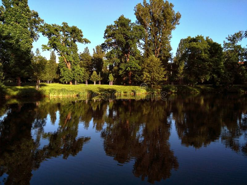 Landscape trees near the water in the park stock photography