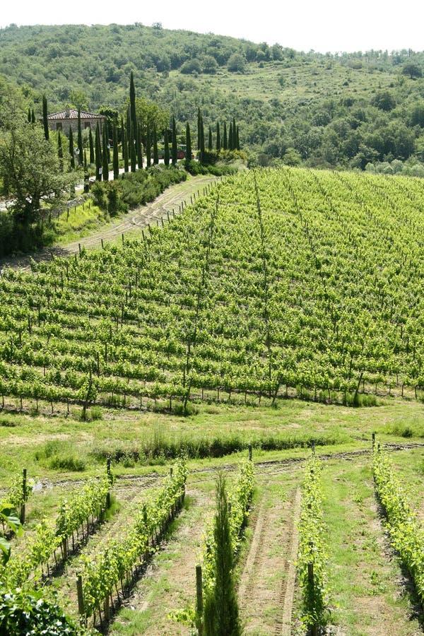 Download Landscape Of Tuscany (Italy) Stock Image - Image of landscape, alcohol: 32648317