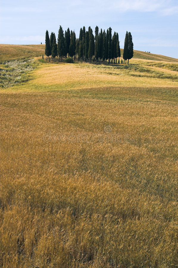 Free Landscape,Tuscany Val D Orcia Stock Photography - 2645042
