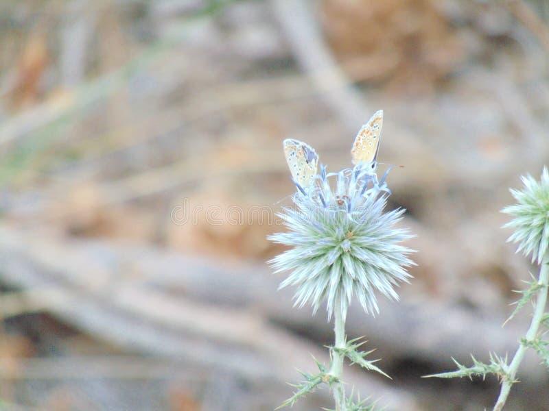 Landscape of two butterflies in a flower. stock photo